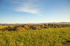 Collina di Dung su un prato con le camice tedesche degli altopiani Fotografia Stock Libera da Diritti