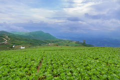 Collina di Phutubberk, Tailandia Fotografie Stock