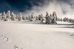 Collina di Praded in montagne di Jeseniky di inverno in repubblica Ceca Immagine Stock Libera da Diritti