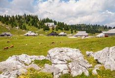 Collina di Velika Planina, Slovenia Immagine Stock Libera da Diritti