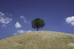 Collina Stock Images