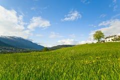 Collina pacifica dell'erba Fotografia Stock Libera da Diritti