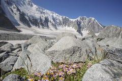 Collina pedemontana della montagna di Beluha altai Fotografia Stock