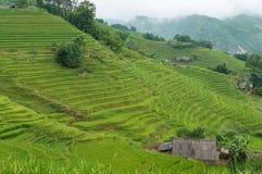 Collina pittoresca con i terrazzi verdi del riso Immagini Stock