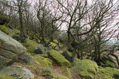Collina rocciosa Fotografia Stock