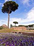 Collina Roma Italia del Palatine Fotografia Stock