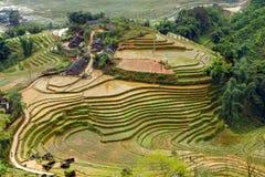 Collina a terrazze del giacimento del riso di agricoltura del villaggio Immagini Stock Libere da Diritti