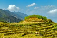 Collina a terrazze del giacimento del riso di agricoltura del villaggio Fotografia Stock