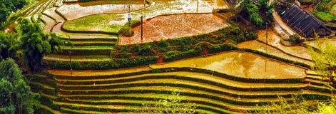 Collina a terrazze del giacimento del riso di agricoltura del villaggio Fotografie Stock Libere da Diritti