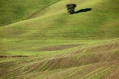 Collina verde, campagna toscana, paesaggio italiano Immagini Stock Libere da Diritti