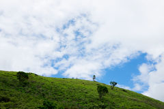 Collina verde con gli alberi Immagine Stock