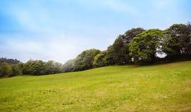 Collina verde con la fila degli alberi nei precedenti Fotografia Stock Libera da Diritti