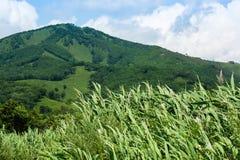 Collina verde contro cielo blu con le nuvole Fotografia Stock Libera da Diritti
