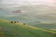 Collina verde del grano da palouse fotografia stock libera da diritti
