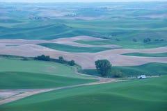 Collina verde del grano da palouse immagini stock libere da diritti