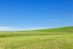 Collina verde sotto cielo blu Insegna di ecologia fotografie stock libere da diritti