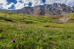 Colline alpine dei wildflowers del prato delle montagne Fotografie Stock Libere da Diritti