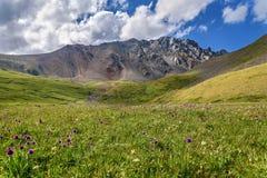Colline alpine dei wildflowers del prato delle montagne Immagini Stock Libere da Diritti