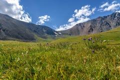 Colline alpine del prato delle montagne dei fiori selvaggi Fotografia Stock Libera da Diritti