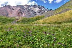 Colline alpine del prato delle montagne dei fiori selvaggi Immagini Stock Libere da Diritti