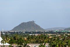 Colline au delà des palmiers sur Aruba Photo libre de droits