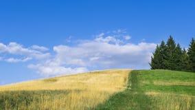colline chaude d'été Photographie stock