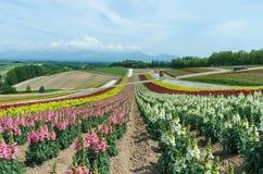 Colline colorée de fleur Images stock