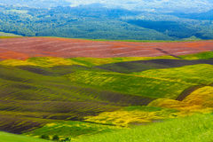 Colline colourful Italia di agricoltura della Toscana Immagine Stock Libera da Diritti