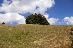 Colline con gli alberi ed il prato Immagine di colore Fotografia Stock