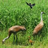 Colline Crane Family de sable Image libre de droits