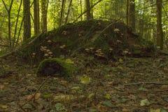 Colline dans la forêt image libre de droits