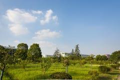 Colline de campus couverte d'herbe verte Photographie stock