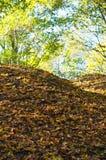 Colline de feuilles d'automne Photos libres de droits
