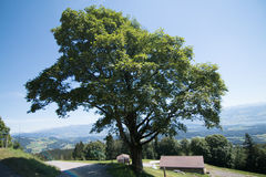 Colline de Follage d'arbre images stock