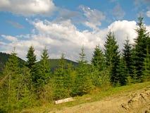 Colline de forêt Photos stock