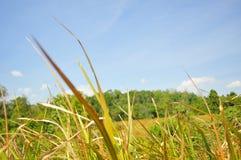 Colline de forêt Images libres de droits