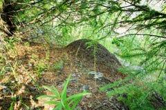 Colline de fourmi dans les bois, sous des arbres Image stock