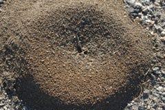 Colline de fourmi de saleté photographie stock libre de droits