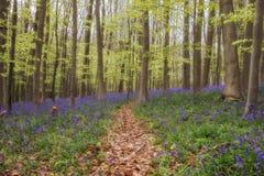 Colline de jacinthe des bois Photo libre de droits