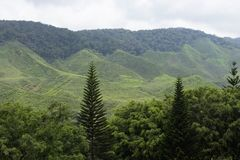 Colline de montagne Image stock