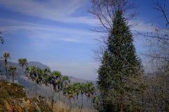 Colline de palmiers dans Yuanyang Photo stock