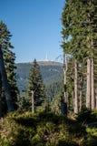 Colline de Praded en montagnes de Jeseniky d'été dans la République Tchèque Photos stock