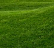 Colline de roulement de place d'herbe verte images libres de droits