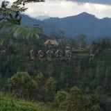 Colline de Sri Lanka avec une vue Images stock