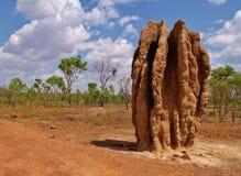 Colline de termite, monticule Images stock