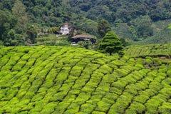 Colline de thé en Cameron Highlands, Malaisie image stock