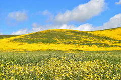 Colline de Wildflower Image stock