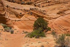 Colline del coyote Fotografie Stock