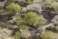 Colline del fiore di ciliegia in valle di Jerte, Caceres Paesaggio spagnolo Fotografia Stock Libera da Diritti