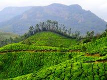 Colline del tè di Munnar Immagini Stock